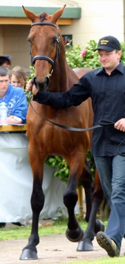 Carpe Diem, Stallion Parade 2009 with David Marshall